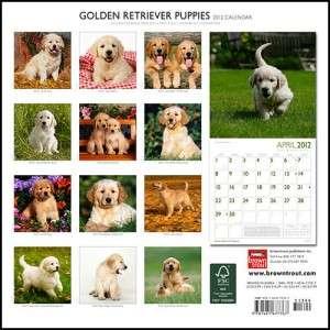 Golden Retriever Puppies 2012 Square Wall Calendar
