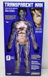 Transparent Man Human Anatomy Model Kit by Lindberg 76009 NEW