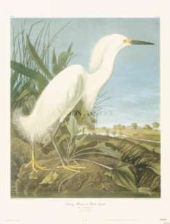 title snowy heron or white heron artist john james audubon size 24