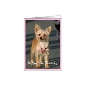 Happy 60th Birthday Chihuahua Dog Card: Toys & Games