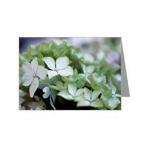 White Hydrangea Greeting Card by Tara