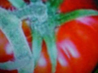 ORGANIC KING KONG GIANT BRIGHT RED TOMATO SEEDS A MUST FOR EVERY