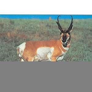 Tru Life Paper Targets   Antelope