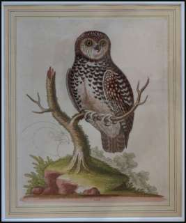 Vintage Original Etching * Little Owl * George Edwards 1755 Signed