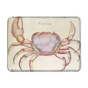Land Crab (w/c on paper) by John White   iPad Cover
