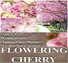 JAPANESE SAKURA FLOWERING CHERRY Tree Seeds ~ Prunus serrulata Cherry